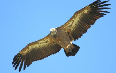 Les suivis ornithologiques